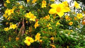 Verse bloem Royalty-vrije Stock Afbeelding