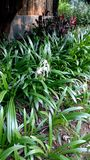 Verse bloem die in tuin tijdens de lente bloeien royalty-vrije stock foto