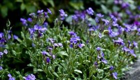 Verse bloemen royalty-vrije stock fotografie