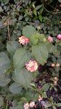Verse bloemen die in tuin tijdens lentetijd bloeien royalty-vrije stock foto's