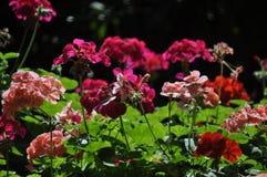 Verse bloemenschoonheid van extreme dichte omhooggaand van het aard groene blad Stock Afbeelding
