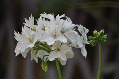 Verse bloemenschoonheid van extreme dichte omhooggaand van het aard groene blad royalty-vrije stock afbeelding