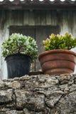 Verse bloeminstallatie in de potten stock foto's