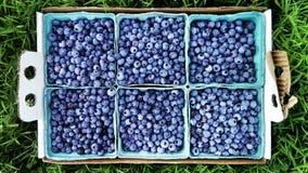 Verse bosbessen in dozen Stock Fotografie