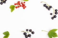 Verse bosbessen, rode en zwarte bessen, kruisbessen, het ornament van de de zomerbes op een witte achtergrond stock afbeeldingen