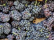 Verse Bossen van Kleine Zwarte Druiven royalty-vrije stock foto