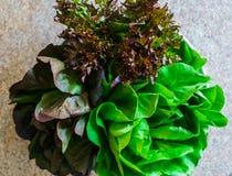Verse bossen van verschillende kleur en verschillend in vormsalade stock foto's
