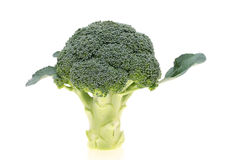 Verse broccoli Stock Afbeeldingen