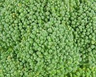 Verse broccoliclose-up stock foto's