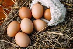 Verse bruine eieren Stock Afbeelding