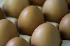Verse bruine eieren in houder Royalty-vrije Stock Afbeelding