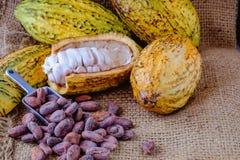 Verse cacao met cacaopeulen en cacaobonen stock foto's