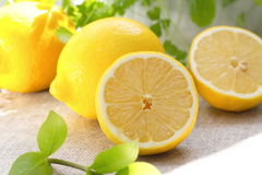 Verse citroen stock afbeelding