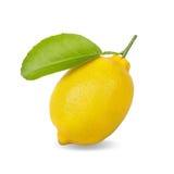 Verse citroen die op wit wordt geïsoleerde Stock Foto's