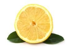 Verse citroen met bladeren Royalty-vrije Stock Fotografie