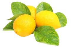 Verse citroenen Stock Foto's