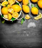 Verse citroenen in een kom Royalty-vrije Stock Foto's