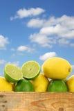 Verse citroenen en kalkvruchten en sommige gesneden degenen Royalty-vrije Stock Foto