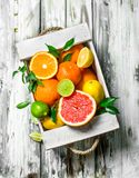 Verse citrusvrucht in de doos royalty-vrije stock afbeelding