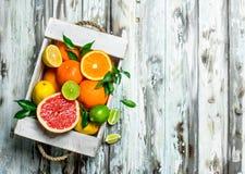 Verse citrusvrucht in de doos royalty-vrije stock foto's