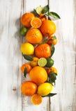 Verse citrusvruchten met bladeren Royalty-vrije Stock Foto