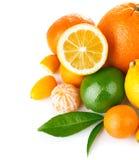 Verse citrusvruchten met groen blad Royalty-vrije Stock Afbeeldingen