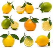 Verse citrusvruchtenreeks Stock Afbeelding