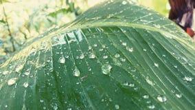 verse dauw op de bladeren tijdens koude ochtenden stock fotografie