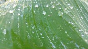verse dauw op de bladeren tijdens koude ochtenden stock afbeelding