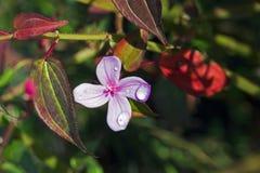 Verse dauwdalingen op de roze bloem royalty-vrije stock afbeelding