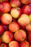 Verse de appelen van het fruit Stock Afbeelding