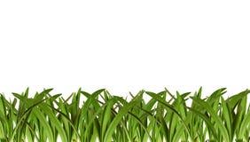 Verse de lente groene bomen. Stock Fotografie