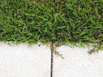 Verse de lente groene gras Royalty-vrije Stock Foto's