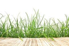 Verse de lente groene gras en geïsoleerde cementweg stock afbeelding