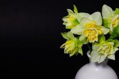 Verse de lentegele narcissen in een witte vaas op een donkere achtergrond stock afbeelding
