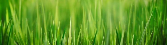 Verse dichte omhooggaand van het grasgebied met bokeh backround Stock Foto
