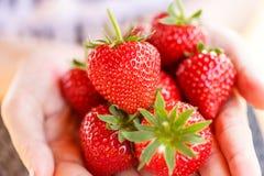 Verse die aardbeien van een aardbeilandbouwbedrijf worden geplukt Stock Foto