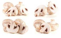 Verse die champignonpaddestoelen op witte achtergrond worden geïsoleerd Reeks of inzameling stock fotografie
