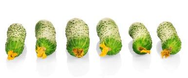 Verse die komkommers met bloemen in geïsoleerde rij worden opgemaakt royalty-vrije stock foto's