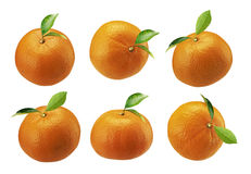 Verse die mandarins sinaasappel op een witte achtergrond wordt geïsoleerd Royalty-vrije Stock Afbeelding