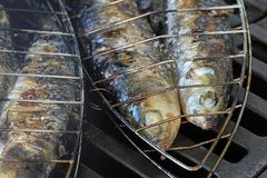 Verse die Sardines op de Grill worden voorbereid Stock Afbeeldingen