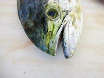 Verse die vissen Mahi Mahi, enkel in het overzees wordt gevangen royalty-vrije stock afbeelding