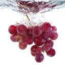 Verse druif in water royalty-vrije stock foto