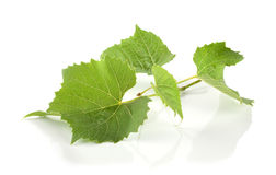Verse druivenbladeren Royalty-vrije Stock Afbeelding