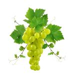 Verse druivendecoratie Stock Afbeelding