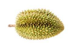 Verse Durian Stock Afbeelding