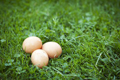 Verse eieren Stock Foto's