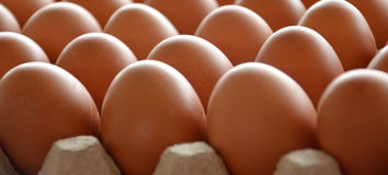 Verse eieren in een markt Royalty-vrije Stock Fotografie