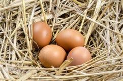 Verse eieren in het nest Royalty-vrije Stock Afbeeldingen