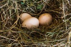 Verse eieren in het stroclose-up Royalty-vrije Stock Fotografie